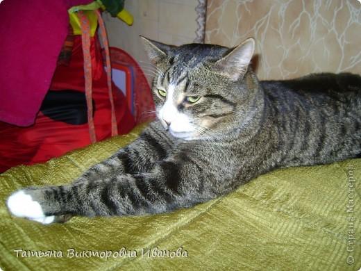 Жила-была в деревне кошка Лапка. В один прекрасный августовский день 2003 года она произвела на свет очень милого и красивого котёнка. По неволе судьбы котёнок переехал жить в город. Он попал в очень дружную и крепкую семью. Имя ему дали самое обыкновенное - Филька! фото 7