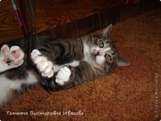 Жила-была в деревне кошка Лапка. В один прекрасный августовский день 2003 года она произвела на свет очень милого и красивого котёнка. По неволе судьбы котёнок переехал жить в город. Он попал в очень дружную и крепкую семью. Имя ему дали самое обыкновенное - Филька! фото 10