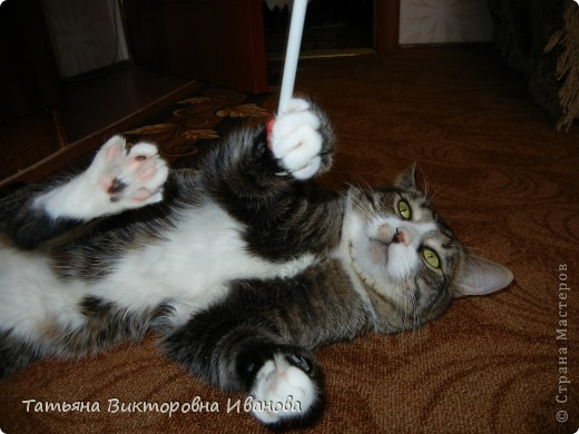 Жила-была в деревне кошка Лапка. В один прекрасный августовский день 2003 года она произвела на свет очень милого и красивого котёнка. По неволе судьбы котёнок переехал жить в город. Он попал в очень дружную и крепкую семью. Имя ему дали самое обыкновенное - Филька! фото 9