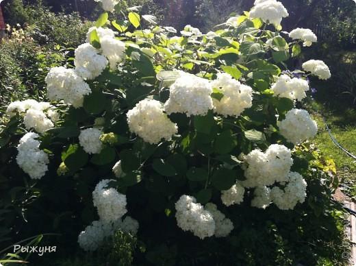 Что может украсить дачу лучше поделок? Конечно, живые цветы, которые цветут, начиная с ранней весны и до поздней осени. Какое разнообразие цвета и великолепных форм демонстрируют нам ирисы! Полюбуйтесь! фото 9