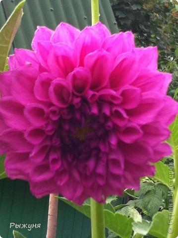 Что может украсить дачу лучше поделок? Конечно, живые цветы, которые цветут, начиная с ранней весны и до поздней осени. Какое разнообразие цвета и великолепных форм демонстрируют нам ирисы! Полюбуйтесь! фото 13