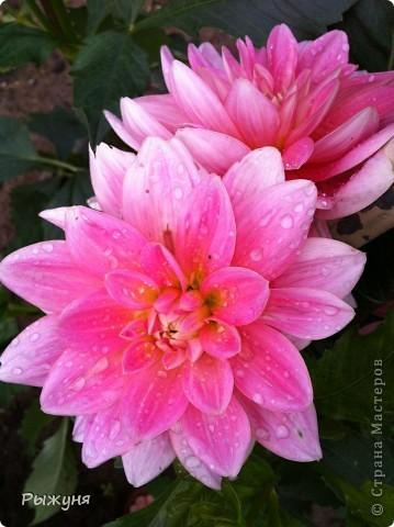 Что может украсить дачу лучше поделок? Конечно, живые цветы, которые цветут, начиная с ранней весны и до поздней осени. Какое разнообразие цвета и великолепных форм демонстрируют нам ирисы! Полюбуйтесь! фото 14
