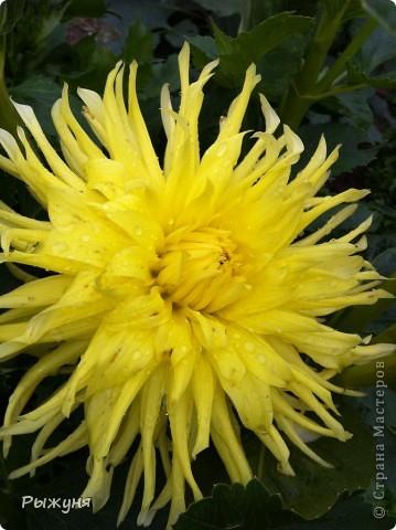 Что может украсить дачу лучше поделок? Конечно, живые цветы, которые цветут, начиная с ранней весны и до поздней осени. Какое разнообразие цвета и великолепных форм демонстрируют нам ирисы! Полюбуйтесь! фото 16