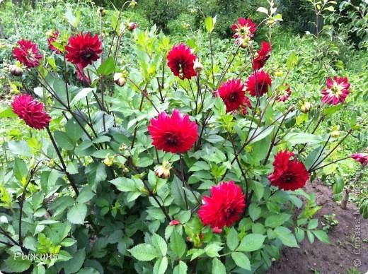 Что может украсить дачу лучше поделок? Конечно, живые цветы, которые цветут, начиная с ранней весны и до поздней осени. Какое разнообразие цвета и великолепных форм демонстрируют нам ирисы! Полюбуйтесь! фото 17