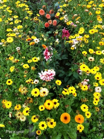 Что может украсить дачу лучше поделок? Конечно, живые цветы, которые цветут, начиная с ранней весны и до поздней осени. Какое разнообразие цвета и великолепных форм демонстрируют нам ирисы! Полюбуйтесь! фото 18