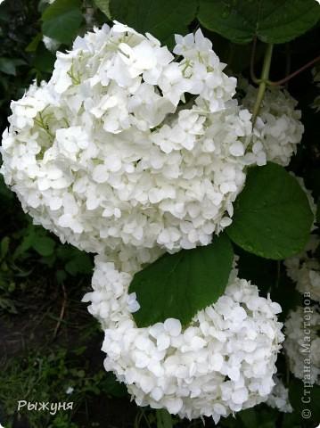 Что может украсить дачу лучше поделок? Конечно, живые цветы, которые цветут, начиная с ранней весны и до поздней осени. Какое разнообразие цвета и великолепных форм демонстрируют нам ирисы! Полюбуйтесь! фото 10