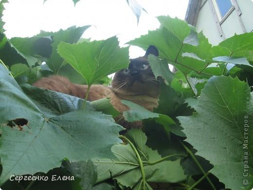 Приезжая на дачу мы всего лишь там гости. Мой фоторепортаж о настоящих хозяевах на нашей даче.  фото 19