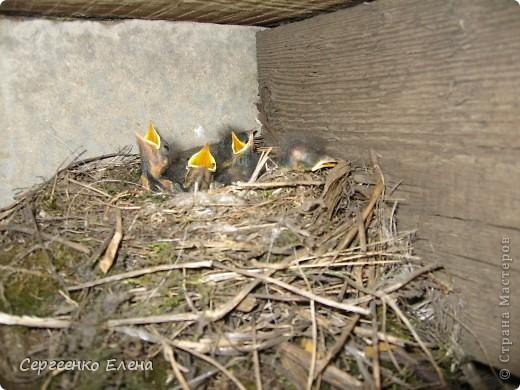 Приезжая на дачу мы всего лишь там гости. Мой фоторепортаж о настоящих хозяевах на нашей даче.  фото 12