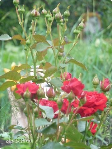 Приглашаю всех любителей природы присоедениться к путешествию по уральскому саду  фото 8