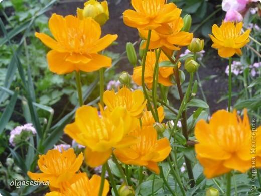 Приглашаю всех любителей природы присоедениться к путешествию по уральскому саду  фото 14
