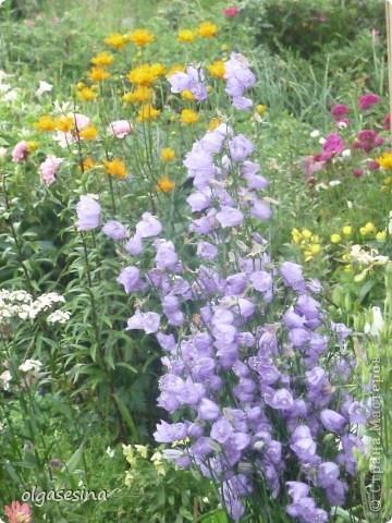 Приглашаю всех любителей природы присоедениться к путешествию по уральскому саду  фото 15