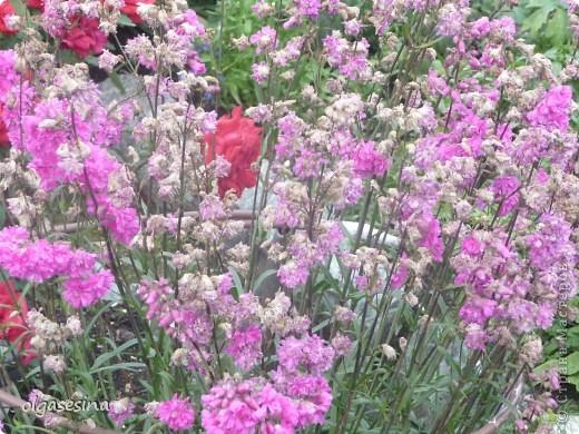 Приглашаю всех любителей природы присоедениться к путешествию по уральскому саду  фото 16