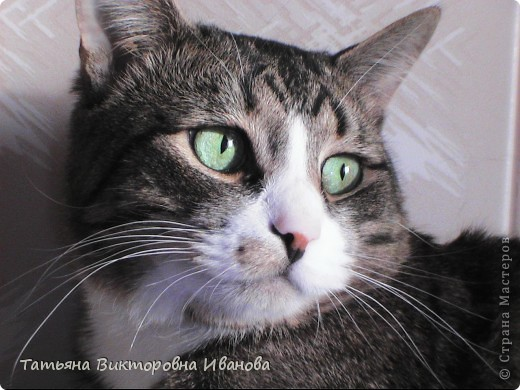 Жила-была в деревне кошка Лапка. В один прекрасный августовский день 2003 года она произвела на свет очень милого и красивого котёнка. По неволе судьбы котёнок переехал жить в город. Он попал в очень дружную и крепкую семью. Имя ему дали самое обыкновенное - Филька! фото 1