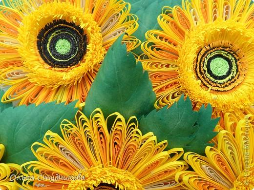 Цветок, который разбудило солнце фото 3