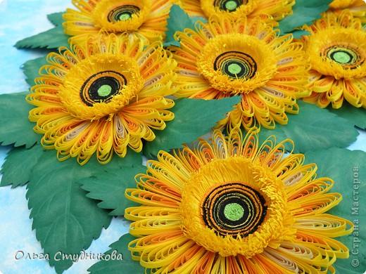 Цветок, который разбудило солнце фото 5