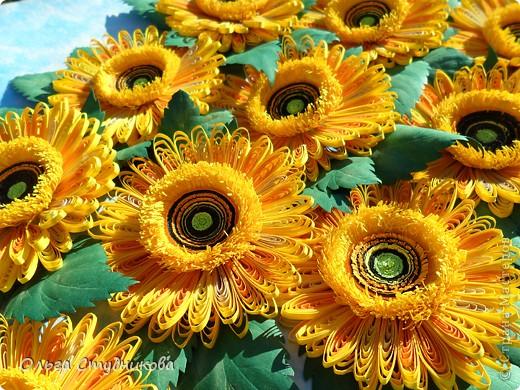 Цветок, который разбудило солнце фото 6