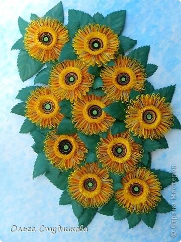 Цветок, который разбудило солнце фото 1