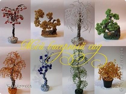 Решила я устроить фотосессию для своих деревьев. Это мои любимчики.  фото 1