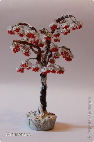 Решила я устроить фотосессию для своих деревьев. Это мои любимчики.  фото 2