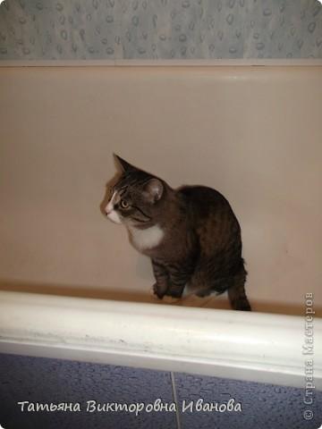 Жила-была в деревне кошка Лапка. В один прекрасный августовский день 2003 года она произвела на свет очень милого и красивого котёнка. По неволе судьбы котёнок переехал жить в город. Он попал в очень дружную и крепкую семью. Имя ему дали самое обыкновенное - Филька! фото 17