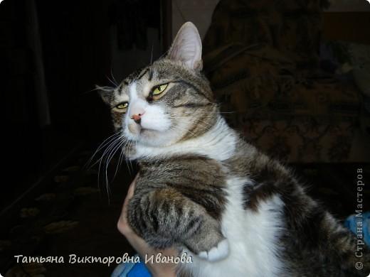 Жила-была в деревне кошка Лапка. В один прекрасный августовский день 2003 года она произвела на свет очень милого и красивого котёнка. По неволе судьбы котёнок переехал жить в город. Он попал в очень дружную и крепкую семью. Имя ему дали самое обыкновенное - Филька! фото 22