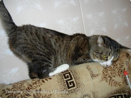 Жила-была в деревне кошка Лапка. В один прекрасный августовский день 2003 года она произвела на свет очень милого и красивого котёнка. По неволе судьбы котёнок переехал жить в город. Он попал в очень дружную и крепкую семью. Имя ему дали самое обыкновенное - Филька! фото 13