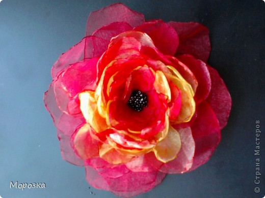 Мой цветочек первенький. фото 1