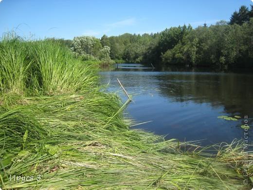 Лето 2011 года . Река Кема . фото 1