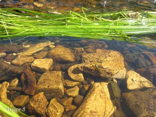 Лето 2011 года . Река Кема . фото 6