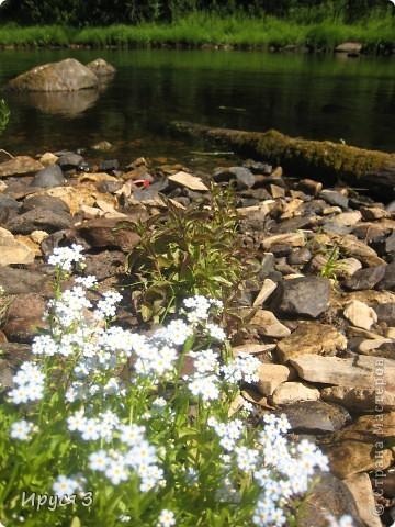 Лето 2011 года . Река Кема . фото 8