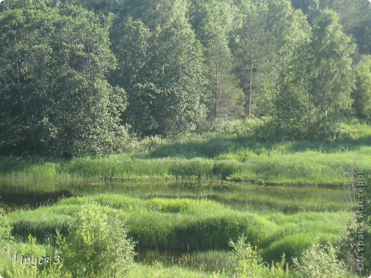 Лето 2011 года . Река Кема . фото 14