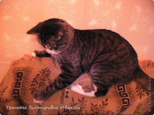 Жила-была в деревне кошка Лапка. В один прекрасный августовский день 2003 года она произвела на свет очень милого и красивого котёнка. По неволе судьбы котёнок переехал жить в город. Он попал в очень дружную и крепкую семью. Имя ему дали самое обыкновенное - Филька! фото 14