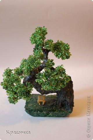 Решила я устроить фотосессию для своих деревьев. Это мои любимчики.  фото 20