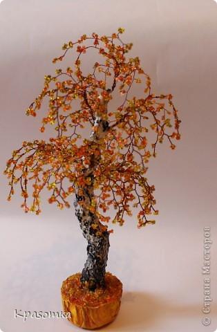 Решила я устроить фотосессию для своих деревьев. Это мои любимчики.  фото 24