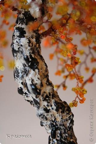 Решила я устроить фотосессию для своих деревьев. Это мои любимчики.  фото 25