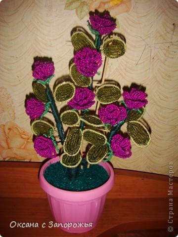 Декоративная Роза в Горшочке