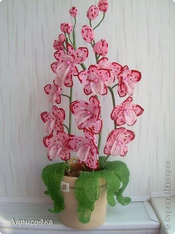 """Орхидея """"Розовая мечта"""""""