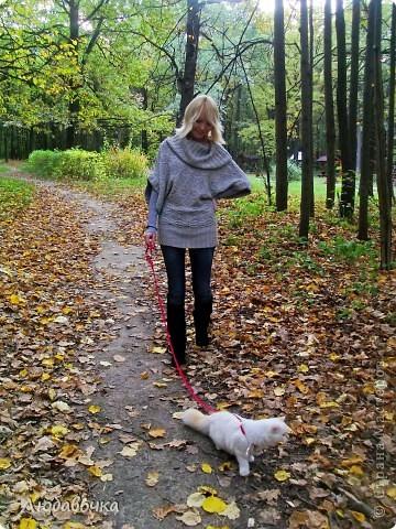 Прогулки в лесу с моей киской-Анфиской)) фото 10