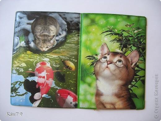 любимые котики Макото Мураматсу фото 1