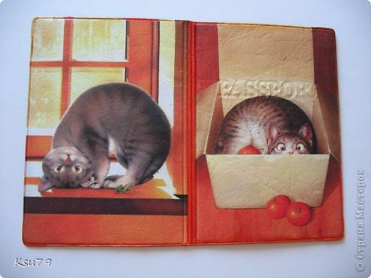 любимые котики Макото Мураматсу фото 2