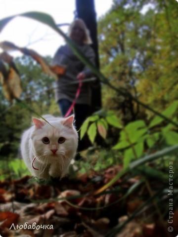 Прогулки в лесу с моей киской-Анфиской)) фото 9
