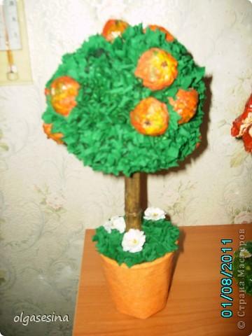 В моем саду очередное пополнение. К кофейным и фисташковым деревьям добавилась яблоня и 2 апельсина. Пока они живут ц меня, но при случае будут подарены. фото 2