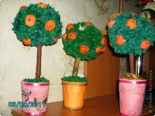 В моем саду очередное пополнение. К кофейным и фисташковым деревьям добавилась яблоня и 2 апельсина. Пока они живут ц меня, но при случае будут подарены. фото 1