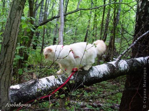 Прогулки в лесу с моей киской-Анфиской)) фото 1
