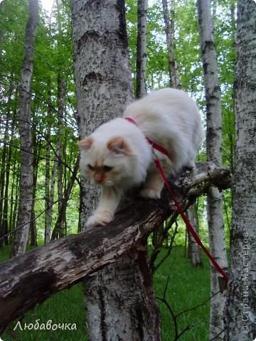 Прогулки в лесу с моей киской-Анфиской)) фото 4
