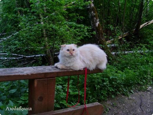 Прогулки в лесу с моей киской-Анфиской)) фото 7