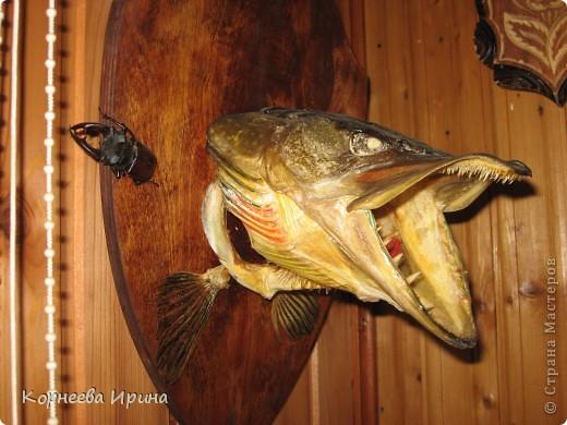 Таких рыб делает мой брат. Сначала солит потом придает форму и сушит фото 2