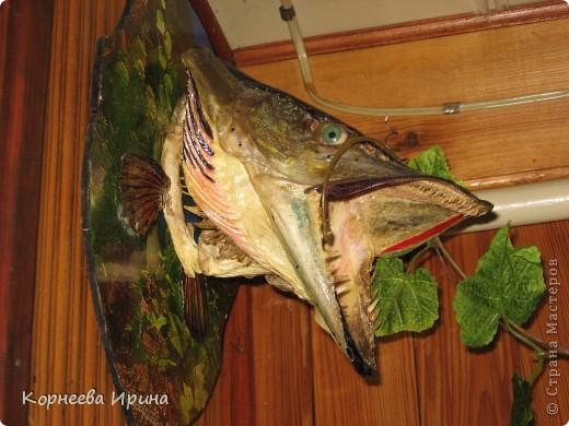Таких рыб делает мой брат. Сначала солит потом придает форму и сушит фото 1