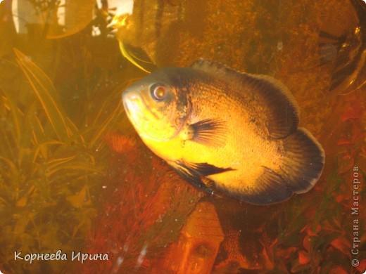 Таких рыб делает мой брат. Сначала солит потом придает форму и сушит фото 7