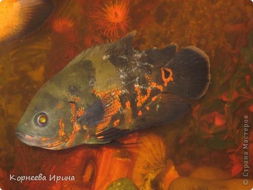Таких рыб делает мой брат. Сначала солит потом придает форму и сушит фото 6